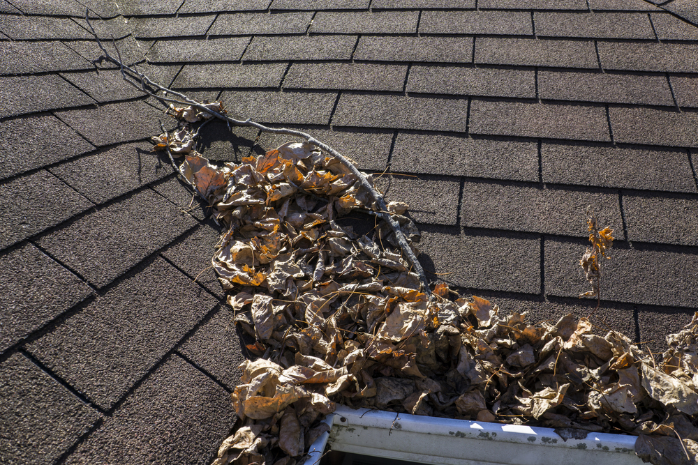 Gutter & Roof Cleaning